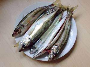 Whiting -